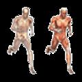 Sistema muscular y óseo